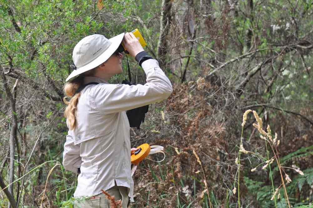 Latest about ZKS Koala research project  by Dr. Manuelle Cottin at the CEC, Cape Otway, Australia  (1/6)