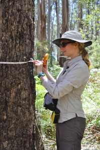 Manuelle measuring trees
